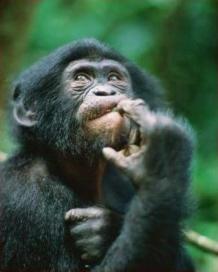 Duvida duvida macaco